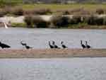 Diversidad de aves en la Raya, foto 12
