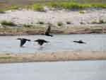 Aves batiendo alas en La Raya, cerca de Riohacha, foto 10