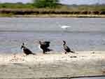 Patos salvajes, foto 5